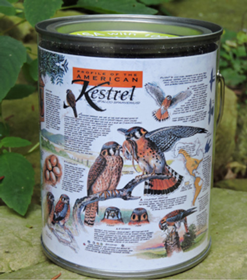 American Kestrel Puzzle in a Pail