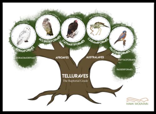 Raptor Family Tree Decal