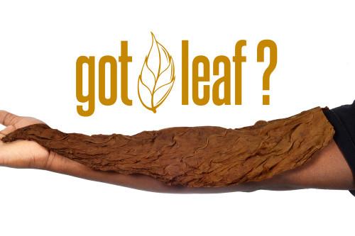 Front King Natural Tobacco Leaf Sweet