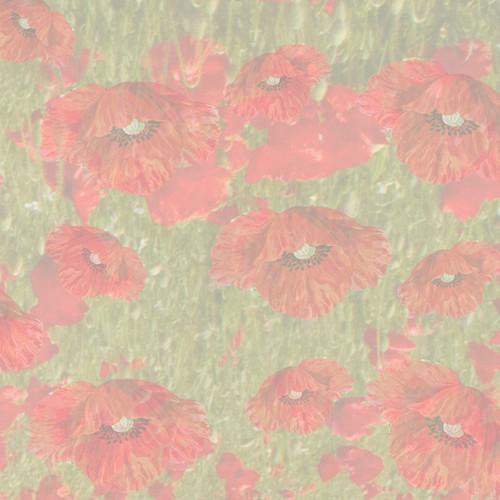 Poppies Cross Stitch Fabric