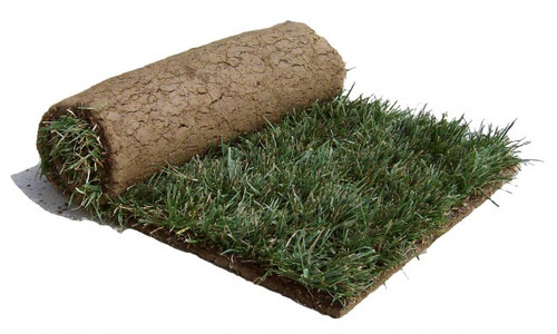 Roll of DuraBlend Tall Fescue Sod