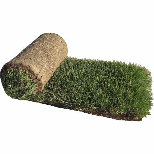 HGT® Kentucky Bluegrass Sod