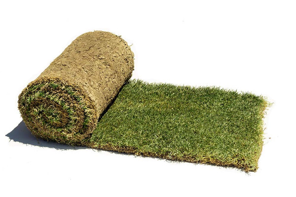 Roll of Tahoma 31 Sod produced by Central Sod