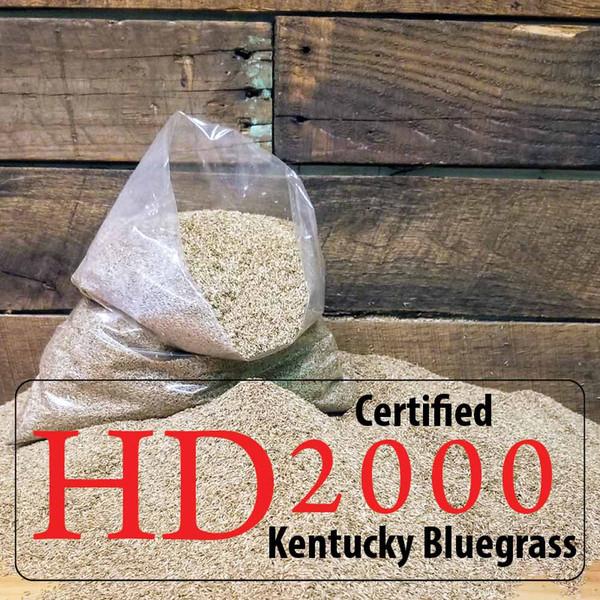 Kentucky Bluegrass Seed