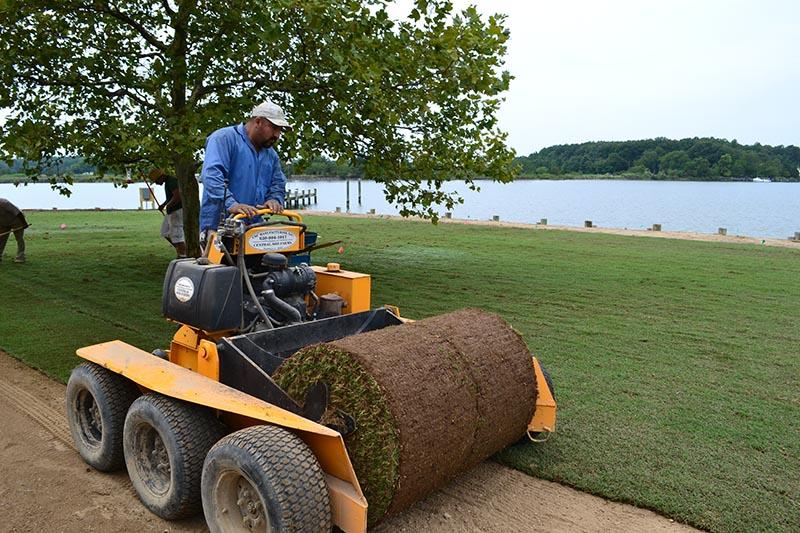 Installing bermudagrass big roll sod