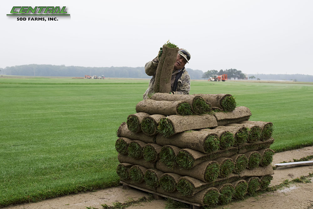 tractor harvesting sod