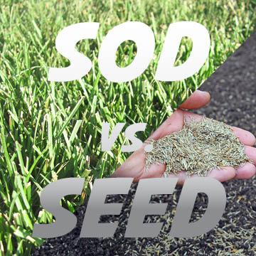 Sod vs Seed