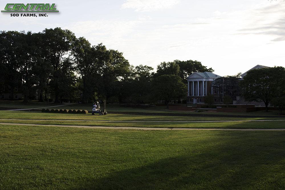 sod UMD Campus