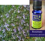 Rosemary, Organic