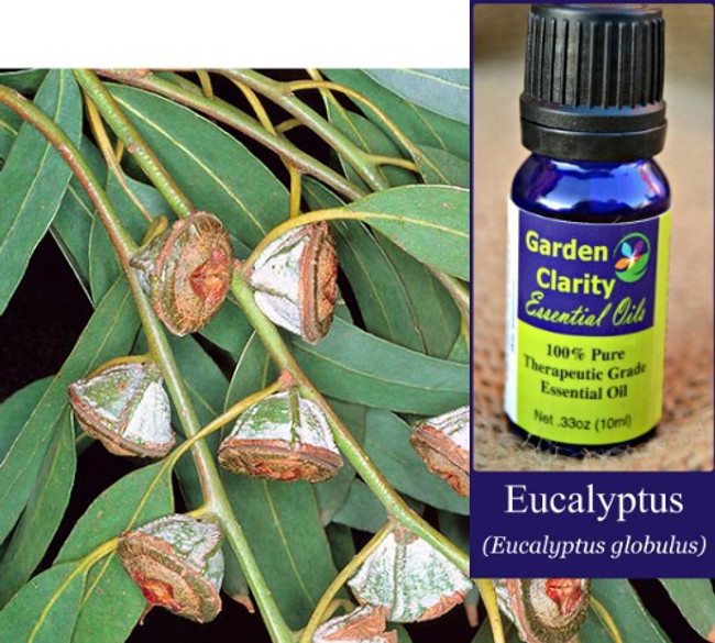 Eucalyptus, Organic