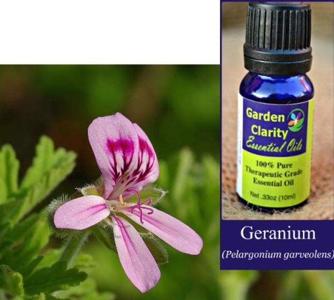 Geranium, Organic
