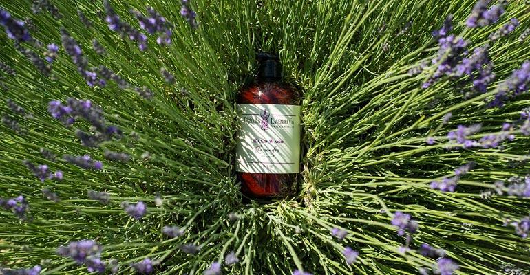 Lavender Hand Wash in Lavender Bush