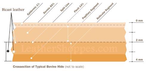 Bi Cast cross section