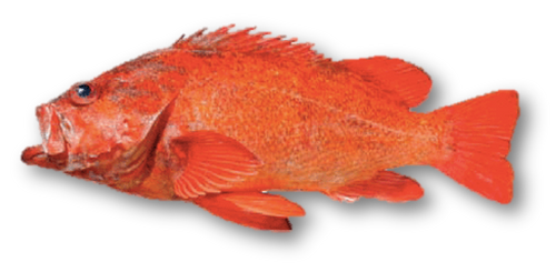 Whole Red Vermillion (2-3lbs Fish)
