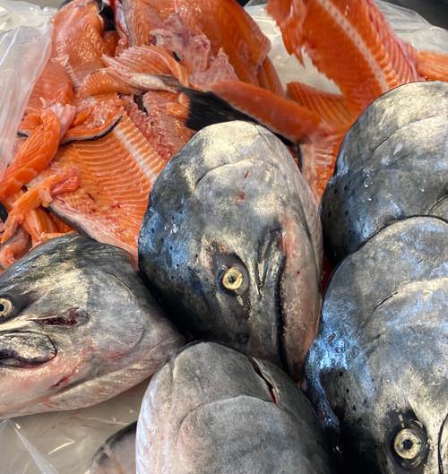 Salmon Head & Bones