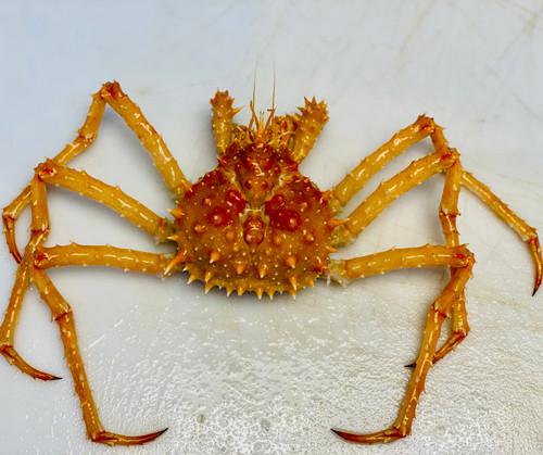 CA King Crab