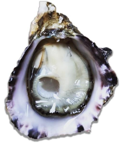 Kusshi Oysters - 1 Dozen