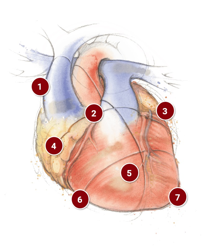 provex-heart.jpg