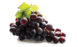 provexcv-grape-seed-2x.jpg
