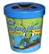 Tip Top Praying Mantis Eggs Cup - 2 Eggs