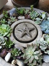 Starfish Vera Fountain, Small