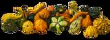 Ornamental Gourd Assorted