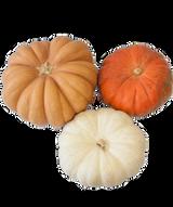 Fall Fantasy Pumpkin Assorted