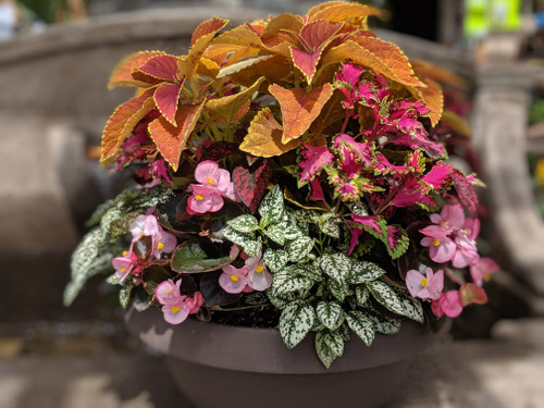Annual Color Bowl Shade - 14 inch