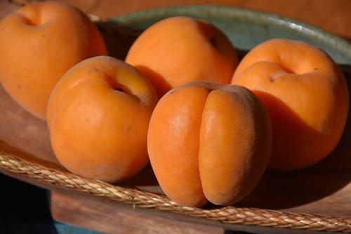 Apricot Blenheim Royal