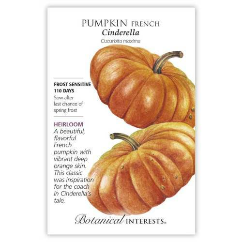 Cinderella Pumpkin Seeds Heirloom