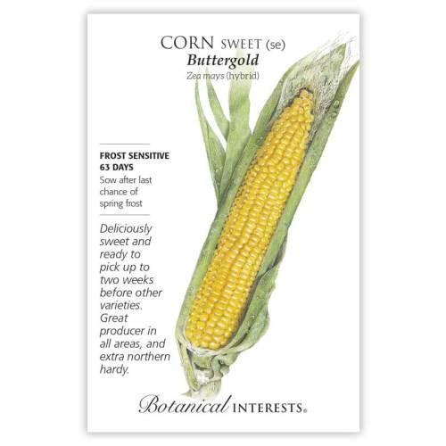Buttergold Sweet Corn Seeds