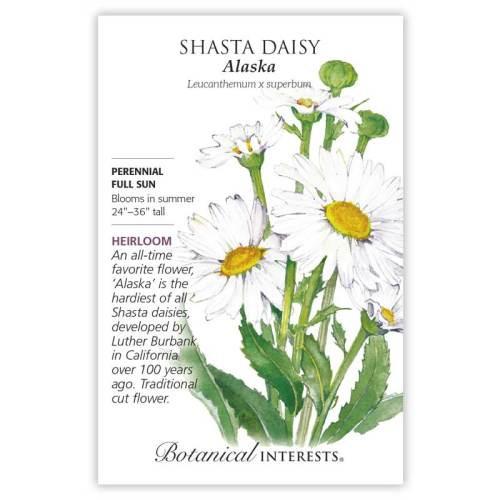 Alaska Shasta Daisy Seeds Heirloom