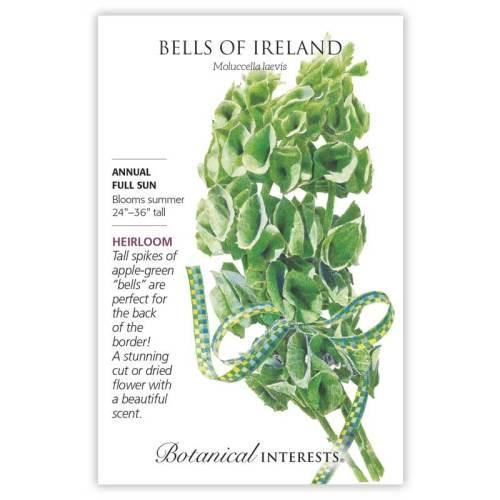 Bells of Ireland Seeds Heirloom
