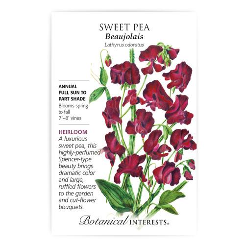 Beaujolais Sweet Pea Seeds Heirloom