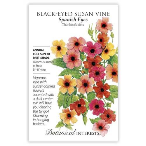 Spanish Eyes Black-Eyed Susan Vine Seeds