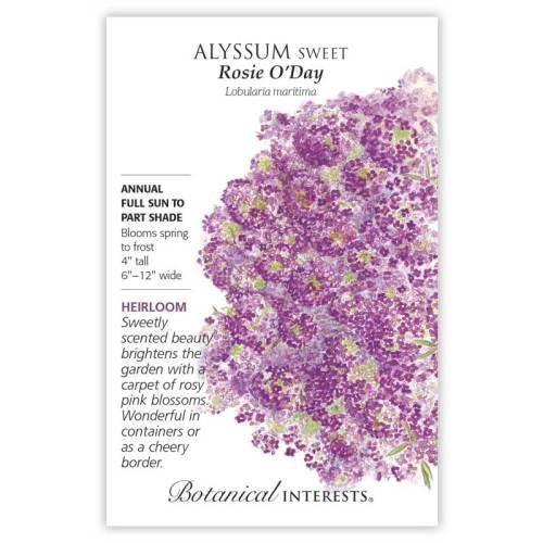 Rosie O'Day Sweet Alyssum Seeds Heirloom