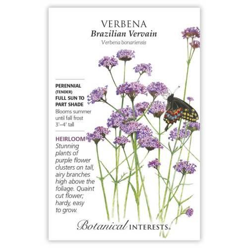 Brazilian Vervain Verbena Seeds Heirloom