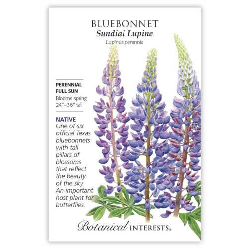 Sundial Lupine Bluebonnet Seeds Native