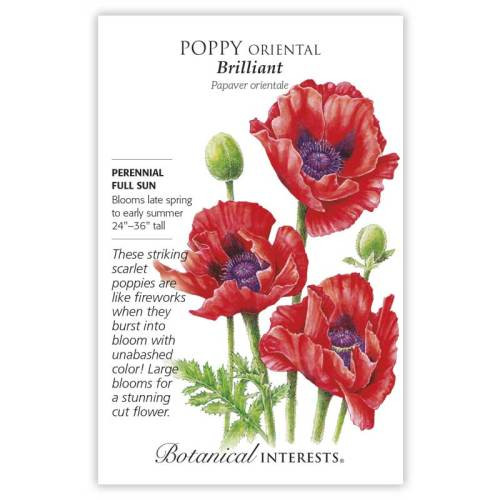 Oriental Brilliant Poppy Seeds