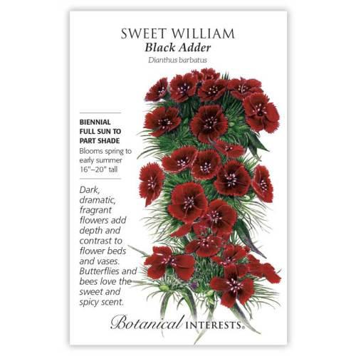 Black Adder Sweet William Seeds