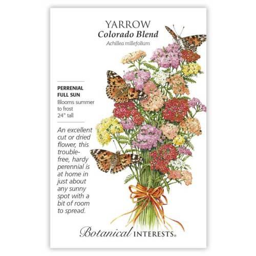 Colorado Blend Yarrow Seeds