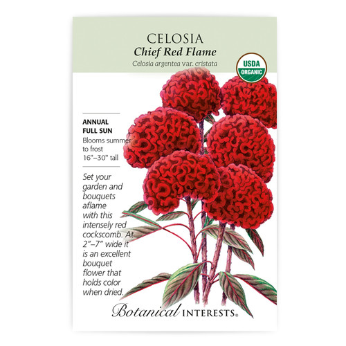 Chief Red Flame Celosia Seeds Organic