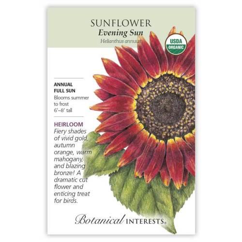 Evening Sun Sunflower Seeds Organic Heirloom