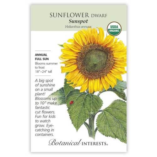 Sunspot Dwarf Sunflower Seeds Organic