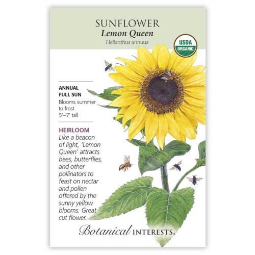 Lemon Queen Sunflower Seeds Organic Heirloom