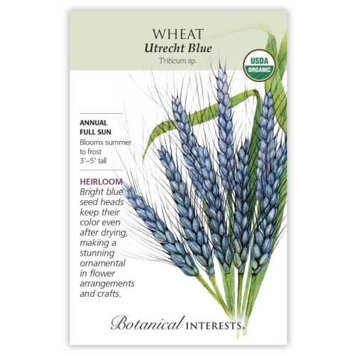 Utrecht Blue Wheat Seeds Organic Heirloom