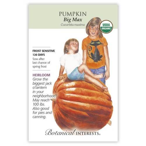 Big Max Pumpkin Seeds Organic Heirloom