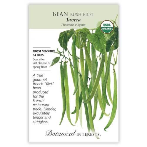 Tavera Filet Bush Bean Seeds Organic
