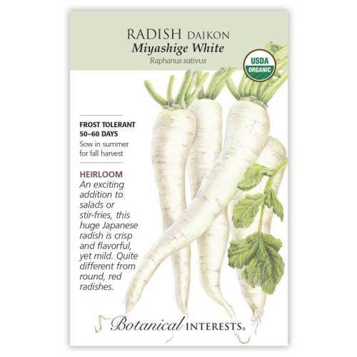 Miyashige White Daikon Radish Seeds Organic Heirloom