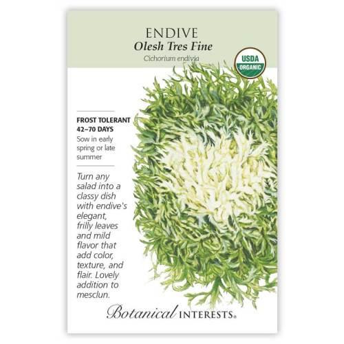 Olesh Tres Fine Endive Seeds Organic